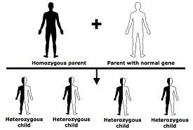 factor v leiden gene propagation